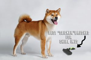 best slicker brush for shiba inus