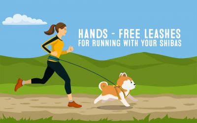 Best Hands Free Running Leash For Running With Doge