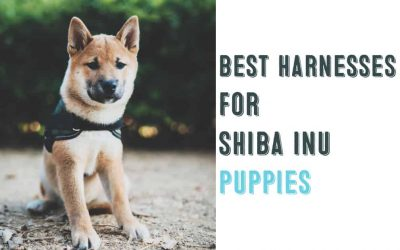 Best Harnesses For Shiba Inu Puppies