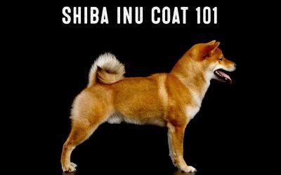 Shiba Inu Coats 101