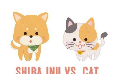 Shiba Inu VS. Cat