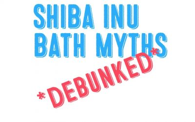 Why Do So Many Shiba Inu Owners Think Baths Are Bad For Shibas!!!??????
