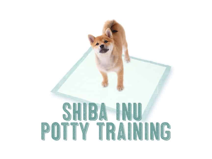 how to potty train shiba inu puppy