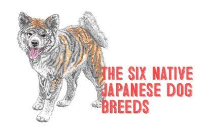 The Six Native Japanese Dog Breeds