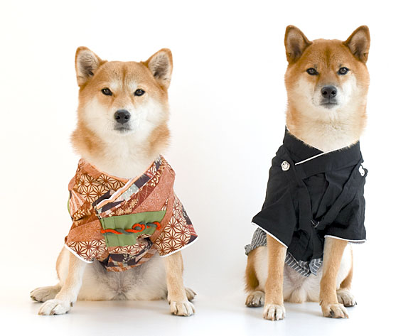 japanese shiba inu dog name ideas
