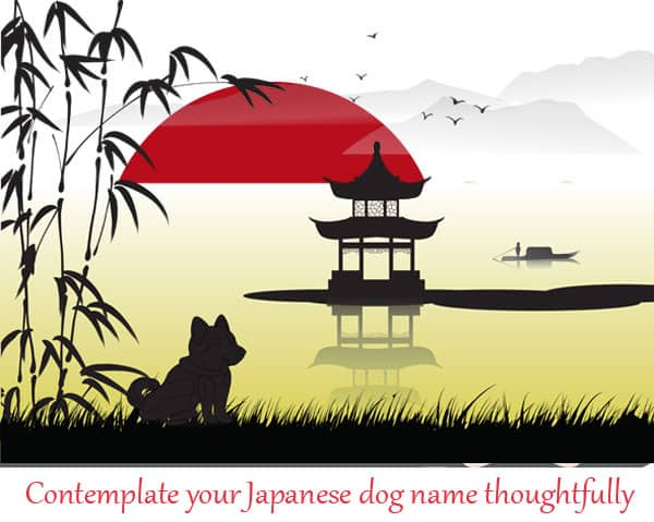 japanese dog name shiba inu cartoon
