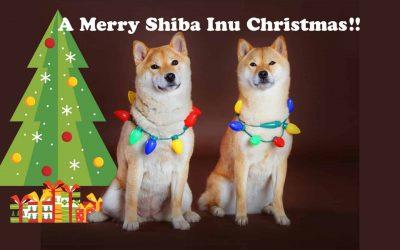 A Merry Shiba Inu Christmas
