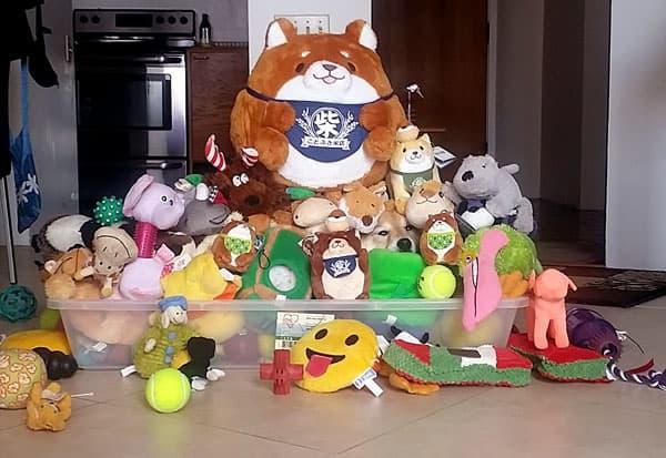 shiba inu lots of plush toys