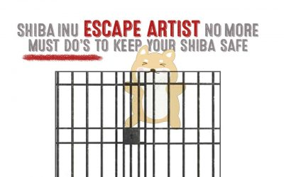 Shiba Inu Escape Artist No More – Must Do Steps To Keep Your Shiba Safe
