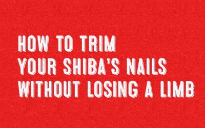 How to Trim Your Shiba's Nails Without Losing a Limb