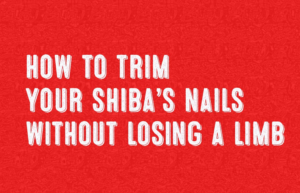 how to trim shiba inu's nails without getting hurt