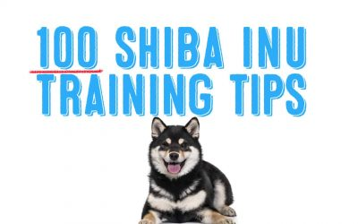 Top 100 Shiba Inu Training Tips