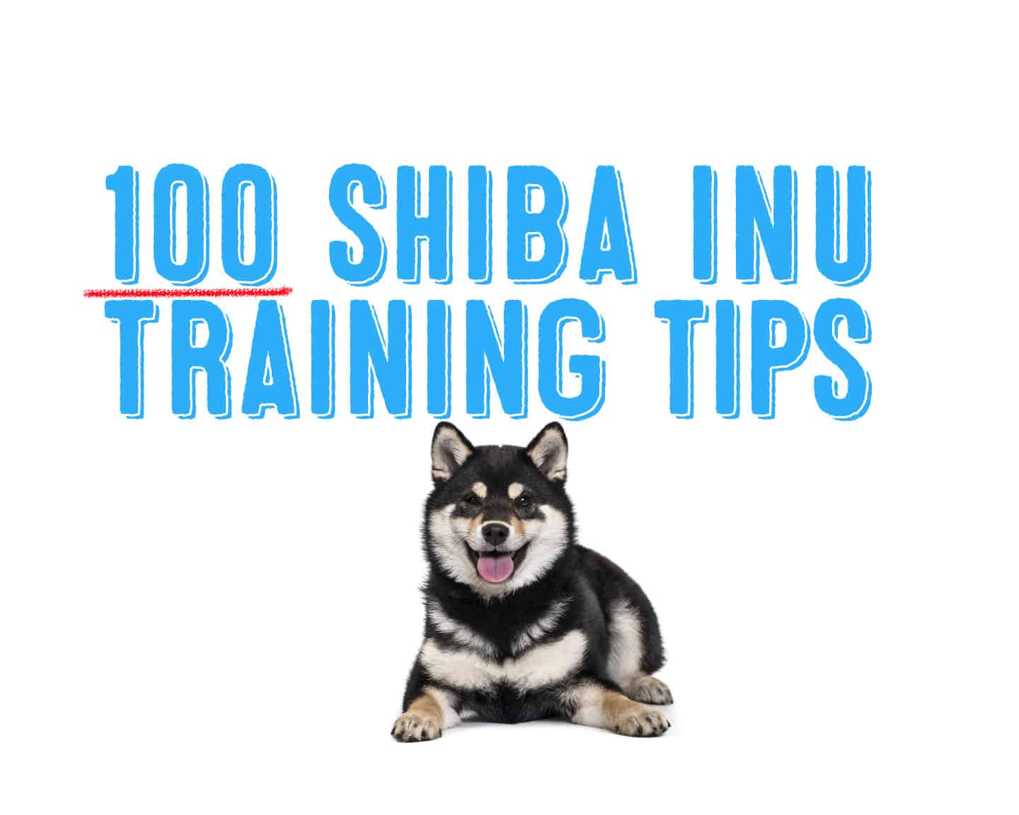 100 of the best shiba inu training tips