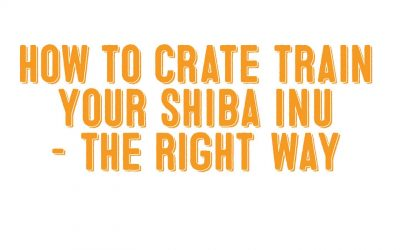How To Crate Train a Shiba Inu – The Right Way