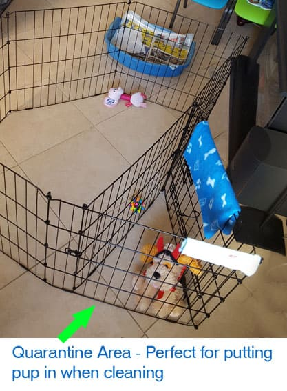 quarantine area during puppy potty cleaning