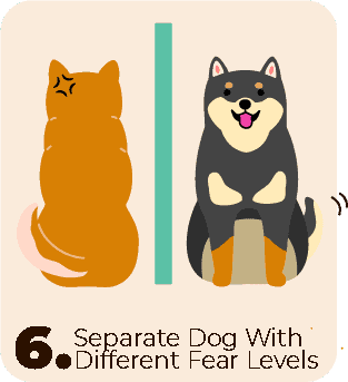 separate fearful shiba inus from other dogs