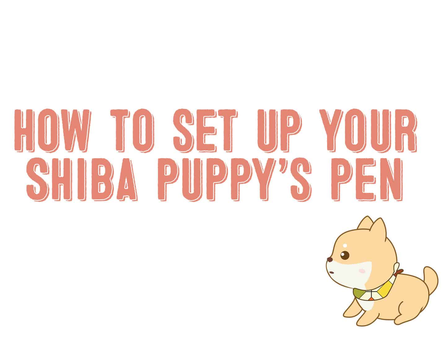 setting up shiba inu puppy pen