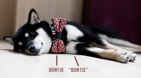 black and tan shiba inu bow tie example