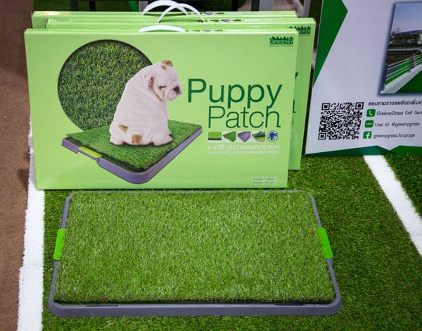 dog potty area artificial grass
