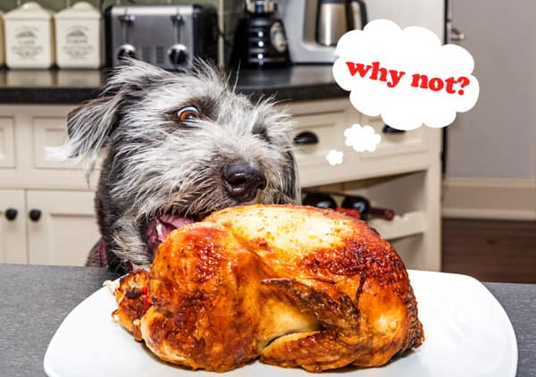 dog stealing whole chicken from countertop
