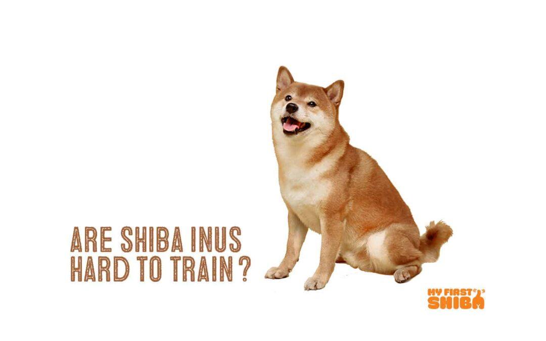 are shiba inus smart