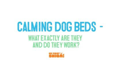 Calming Dog Beds – What Are They and Do They Work?