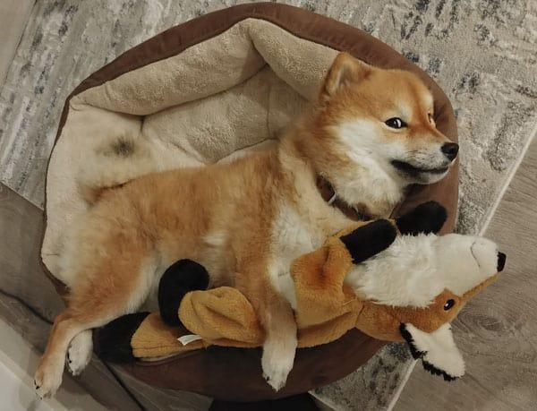 shiba inu inu calming donut dog bed