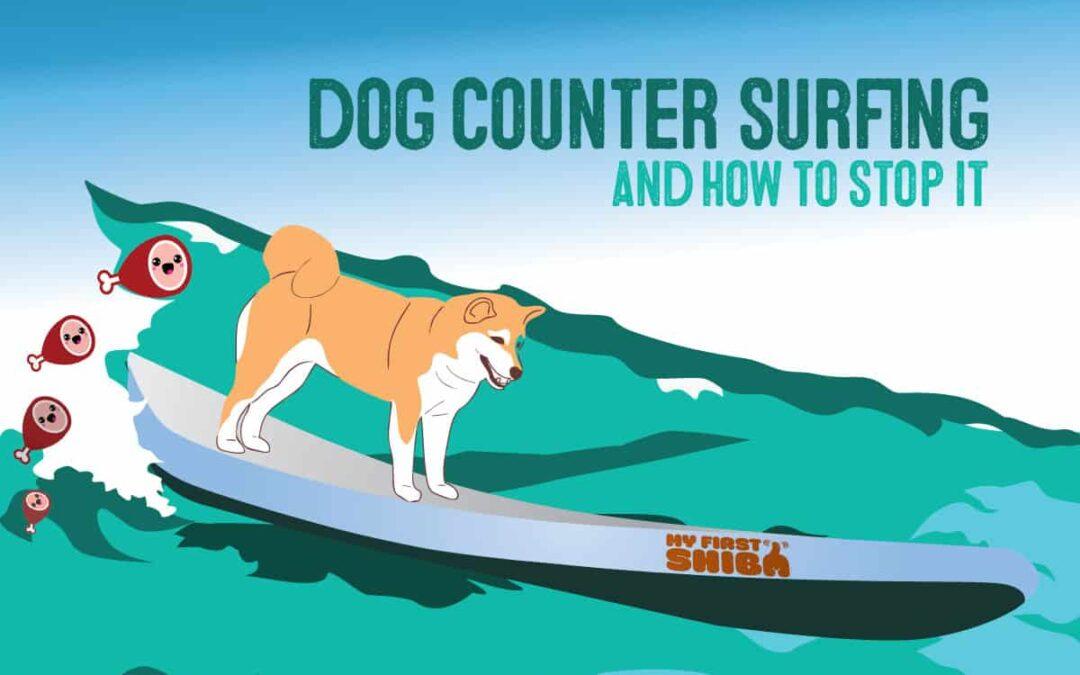 shiba inu dog counter surfing article