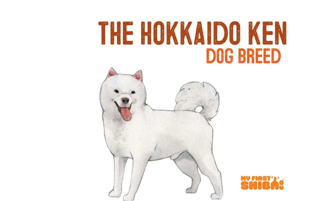 hokkaido Ken dog breed