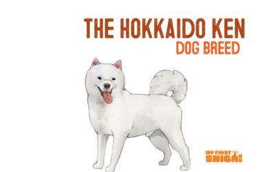 All About The Hokkaido Dog – Ainu-Ken Dog Breed