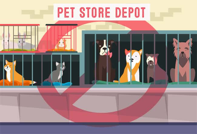 avoid pet store for puppy mill dogs