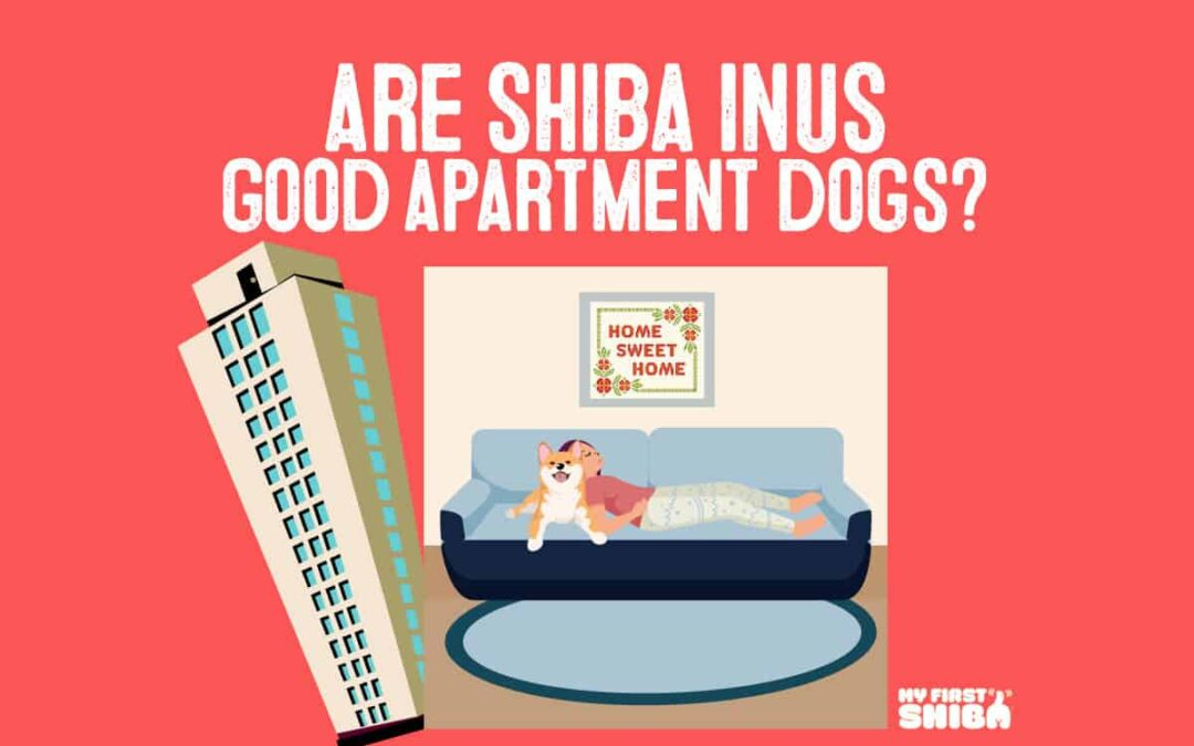 are shiba inus good apartment dogs infographic