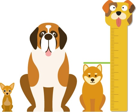 comparison dog shiba inu sizes