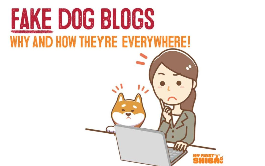 fake dog blog cover illustration with shiba inu