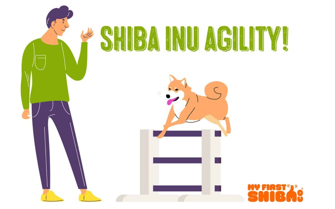 shiba inu agility infographic