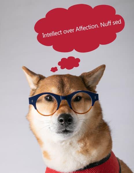 aloof but intelligent shiba inu dog