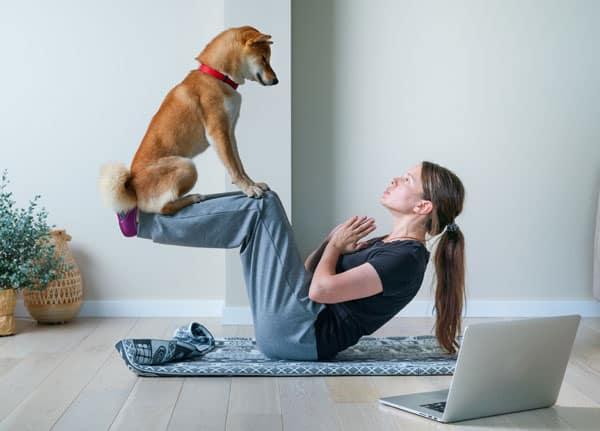 tiktok shiba inu doing yoga