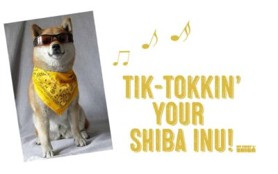 TikTok Shiba Inu – How To Make Your Shiba TikTok Famous!