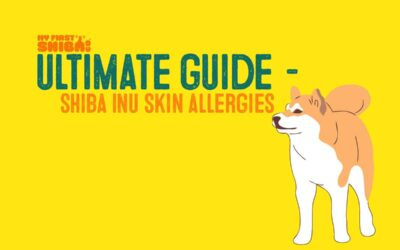 Shiba Inu Skin Allergies – Ultimate Resource and Guide