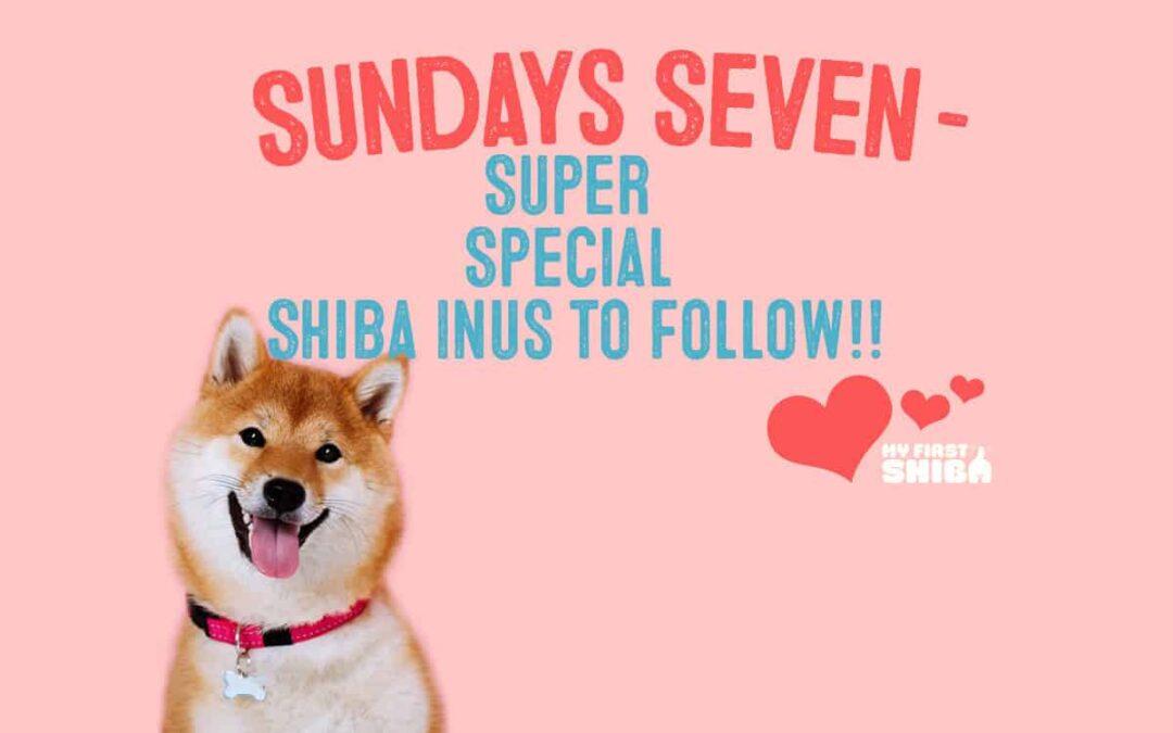 seven super special shiba inus