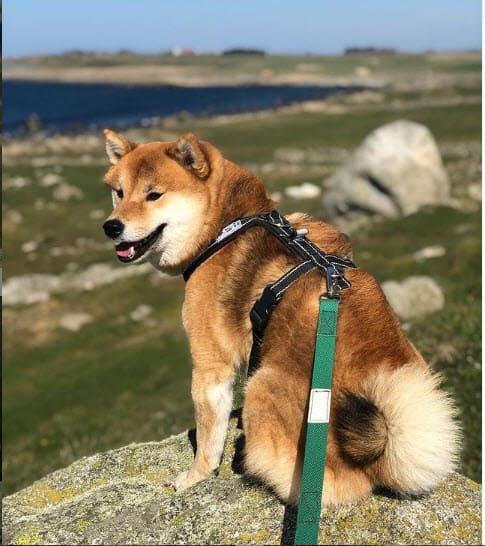 jimmy t hiking