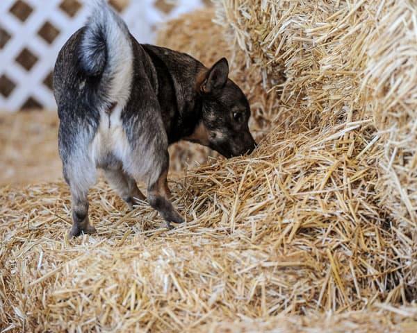 barn hunting
