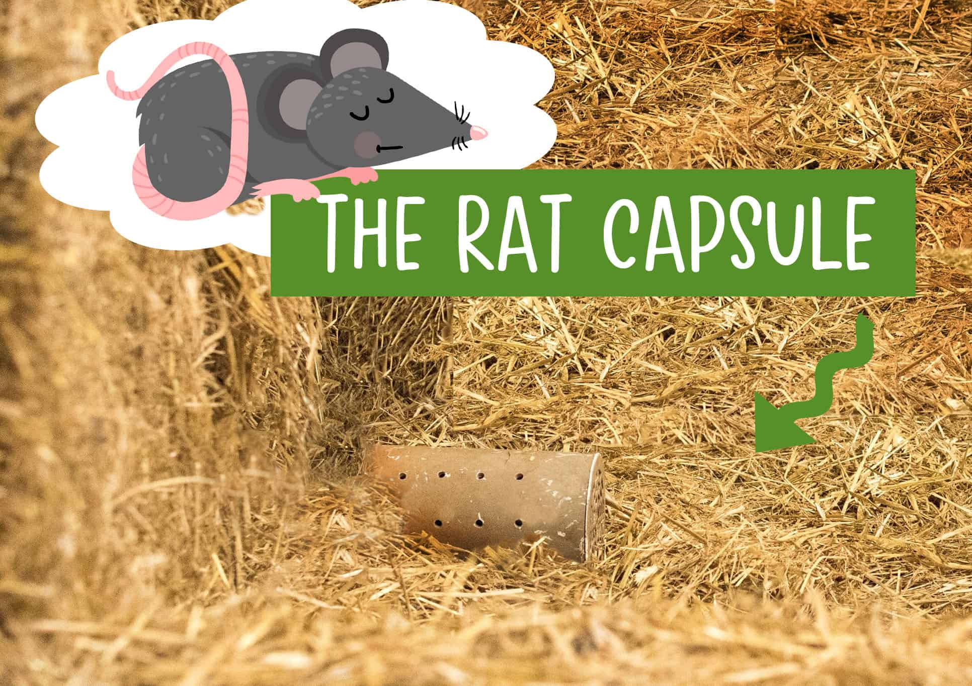 shiba inu barn hunt rat capsule