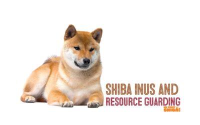 Shiba Inus and Resource Guarding