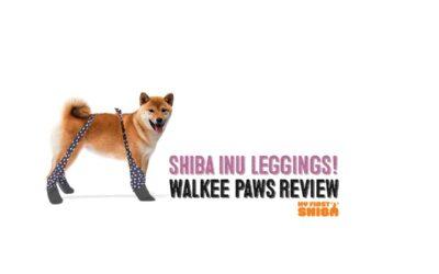 Walkee Paws Dog Leggings Review