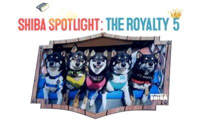 Spotlight on Shibas! – Meet The Royalty FIVE