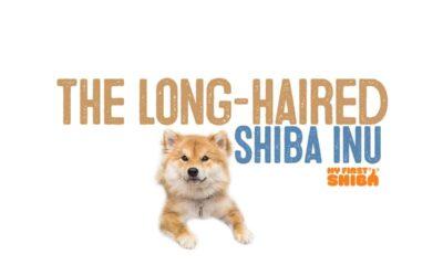 The Long-Hair A.K.A. Wooly Shiba Inu
