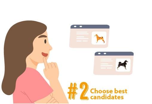 shiba inu puppy breeder candidates