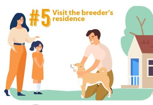 visit shiba inu puppy breeder visit