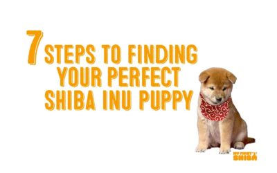 7 Steps To Bringing Home Your Shiba Inu Puppy – Ethically and Safely